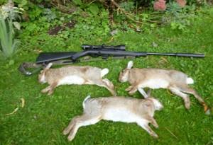 rabbits 005