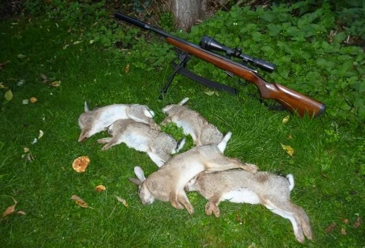 rabbits 013