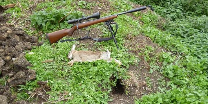 rabbits 019