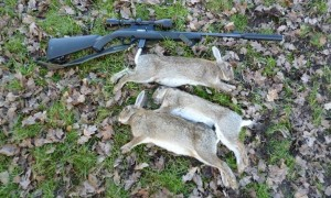 rabbits 030
