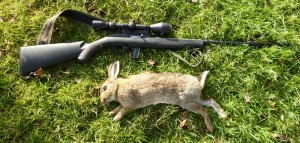 rabbits 032