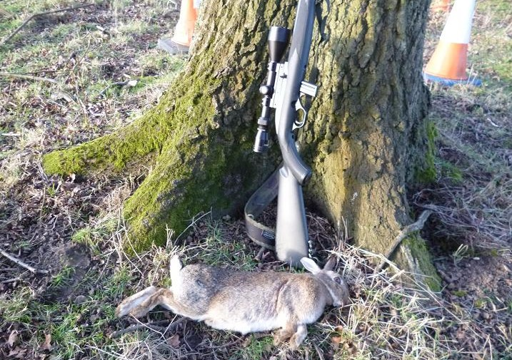 rabbits 038