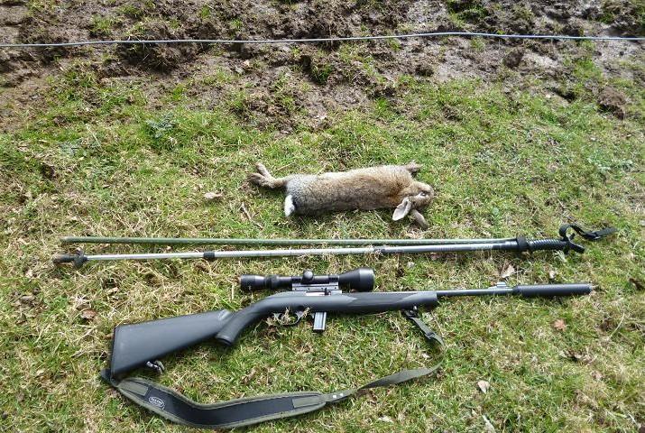 rabbits 045