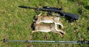 rabbits 047