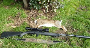 rabbits 050