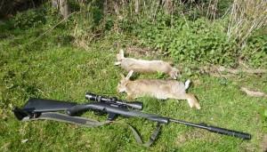 rabbits 051