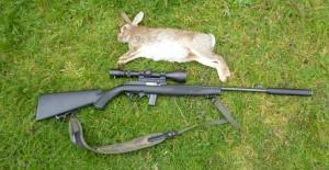 rabbits 062