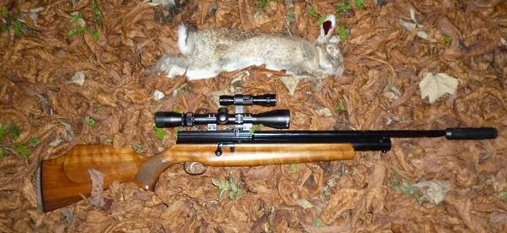 rabbits 067