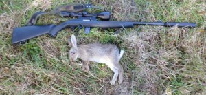 rabbits-079