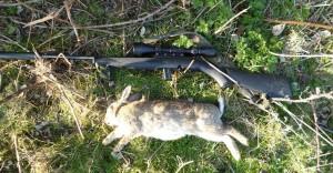rabbits 108