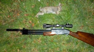 rabbits 119