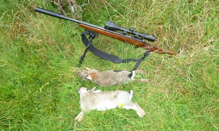 rabbits 021