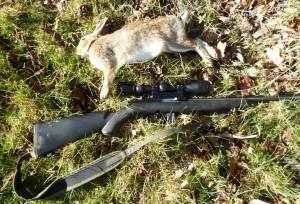 rabbits 024