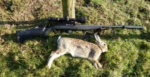 rabbits 025