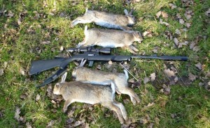 rabbits 031