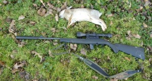 rabbits 036