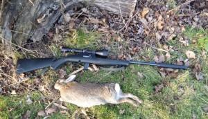 rabbits 040