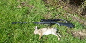 rabbits 053