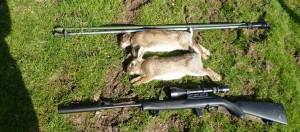 rabbits 054