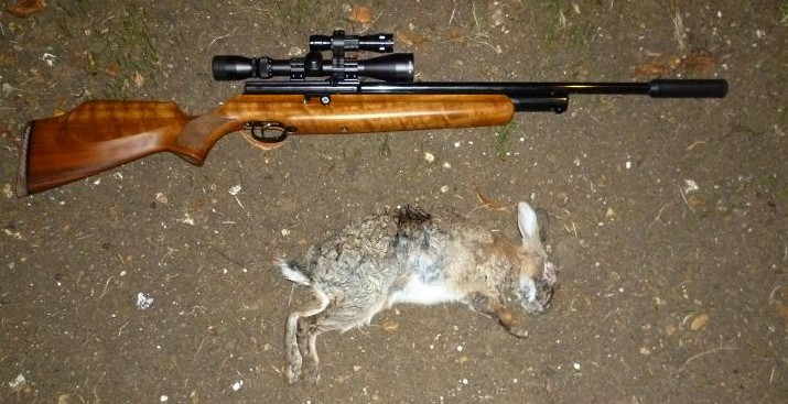 rabbits 068
