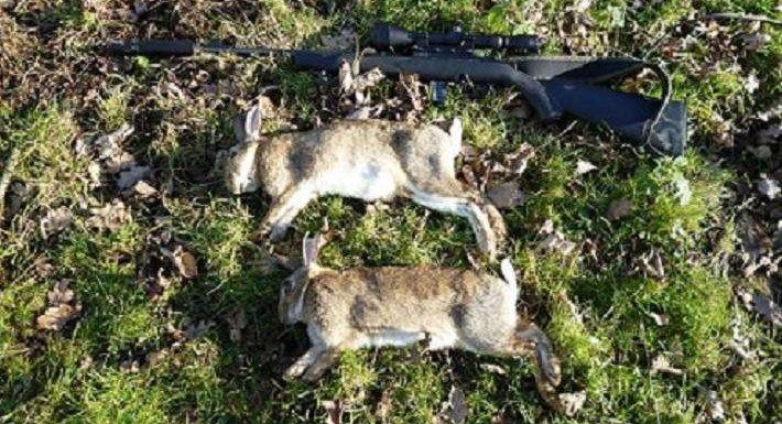 rabbits-027