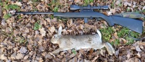 rabbits 099