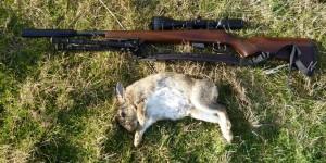 rabbits 102