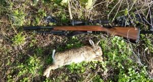 rabbits 104