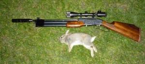 rabbits 112