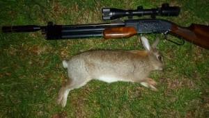 rabbits 113
